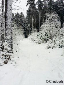 WinterWonderland_final